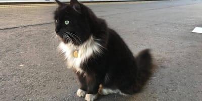 <p>Kot Felix na swoim kolejowym posterunku</p>