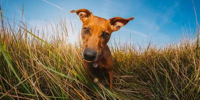 Dzika Fota: inicjatywa z Poznania, która w nietypowy sposób pomaga zwierzętom znaleźć dom