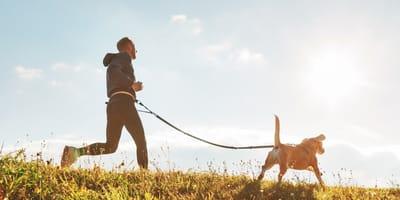 Joggingleine für Hunde: Must-have für sportliche Vierbeiner