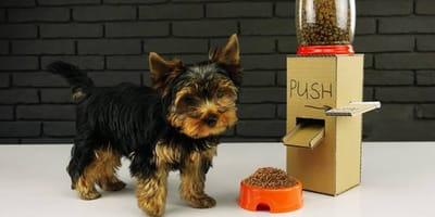 como hacer un despachador de comida para perros