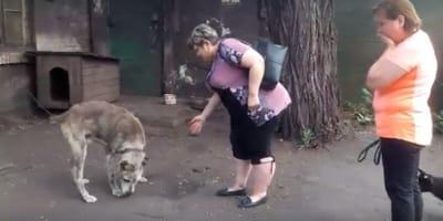 cane-rubato-incontra-la-sua-padrona