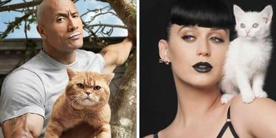 famosos con gato