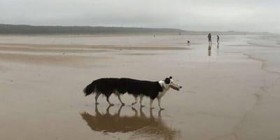 Ein achtbeiniger Hund am Strand