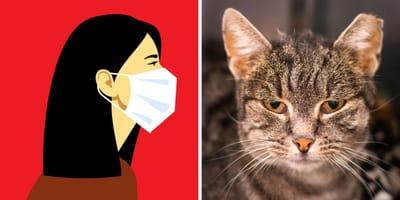 Coronavirus en gatos: ¿es un peligro para los humanos?