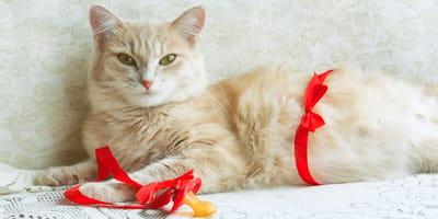una gata en el parto