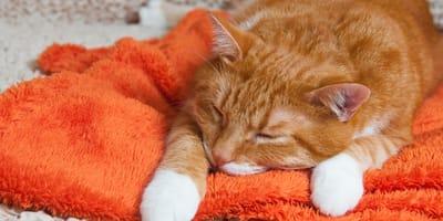 I tipi di veleno per gatti: sostanze e prodotti velenosi