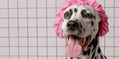 razas perros sin olor