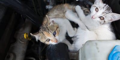gato atrapado en el motor