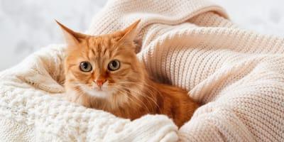 protege a tu gato del frio