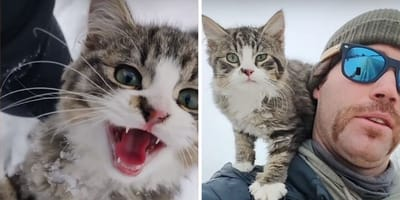 Watch: Explorer spots a screaming kitten and has no idea what he's getting into
