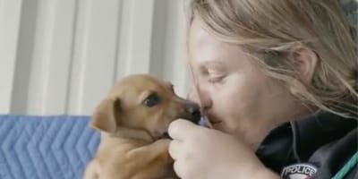 Hero! Woman takes over animal shelter and reduces death rate to zero