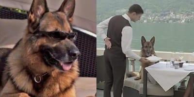 Gunther IV - najbogatszy pies na świecie