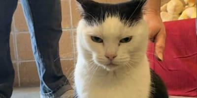el peor gato del mundo adopcion