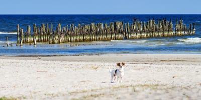 Ostfriesland von seiner schönsten Seite: Borkum mit Hund