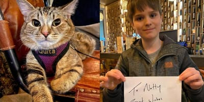 tabby cat, jon snow, and child  holding up signed paper