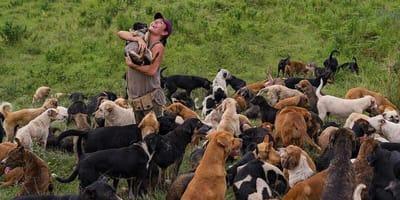 refugio para perros en costa rica