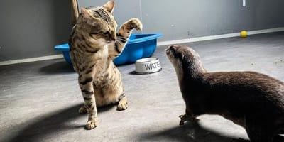 Katze und Otter