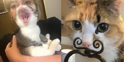gatos graciosos hacen reir
