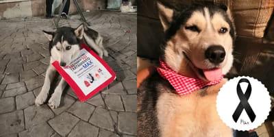 perro vende cupcakes para su tratamiento