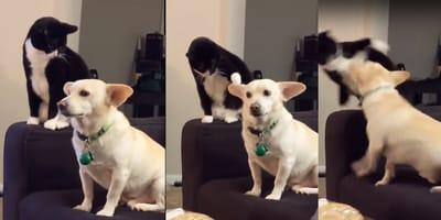 gato moelsta a perrito y es sorprendido