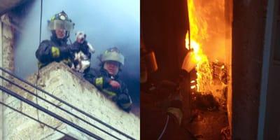 rescataron perrro de casa en llamas