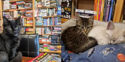 Montage of stray cats in bookshop