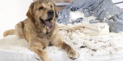 ¿Por qué mi perro huele mal?