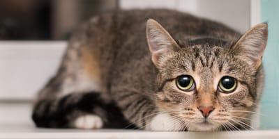 5 cosas que hacen creer a tu gato que no lo amas