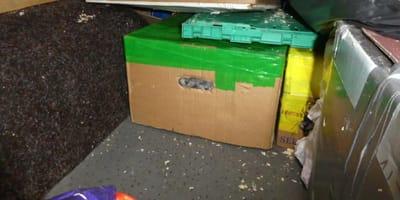 Kätzchen in Karton versteckt