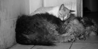 Coronavirus: animalista in azione salva cani e gatti con gesti estremi