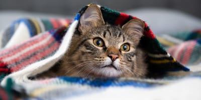 gato con frío