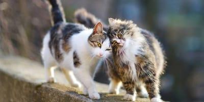 adoptar gato de la calle