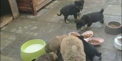 Koronawirus: tysiącom porzuconych zwierząt grozi śmierć głodowa