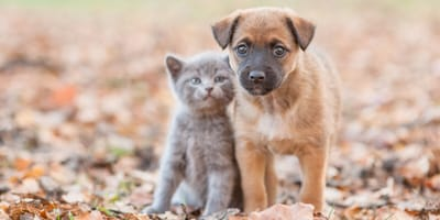 Kitten and a puppy