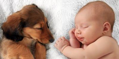 bebe perro presentacion