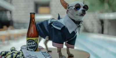 perro en hotel pet-friendly méxico