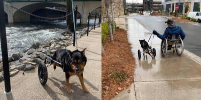 cane-e-uomo-entrambi-su-sedia-a-rotelle