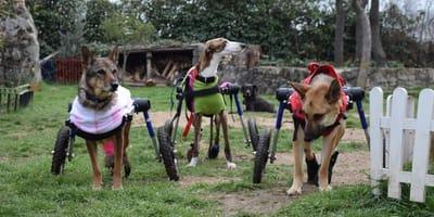 bichos raros discapacitados perros gatos