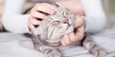 5 of the most affectionate cat breeds