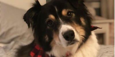 5 czynności, które wytrącają nasze psy z równowagi, a my o tym nie wiemy