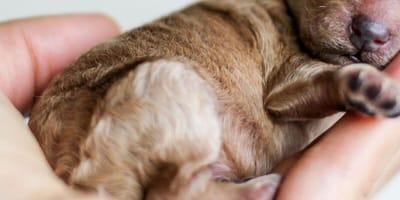 Little puppy in man's hand
