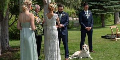 Hund bei der Hochzeit