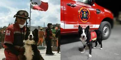 newton  perro rescatista de yucatan