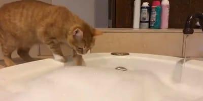 Gatto-rosso-sul-bordo-della-vasca
