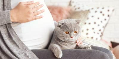Enfermedad del gato,  toxoplasmosis