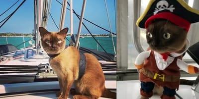 The exploits of this seafaring Burmese kitten will amaze you!