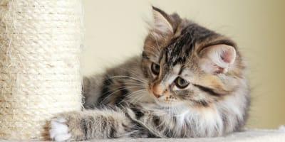 Los mejores rascadores para gatos. ¡Evita que destrocen tus muebles!