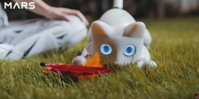 MarsCat reaguje na kocie zabawki i bawi się jak prawdziwy kot