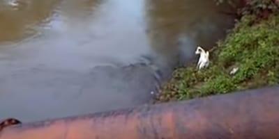 perro se salva de cocodrilo