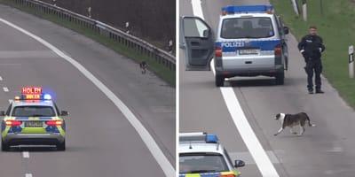 Polizei mit Hund auf Autobahnfahrbahn